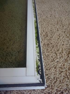 Dirty window sash